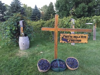 Vineyard with sign